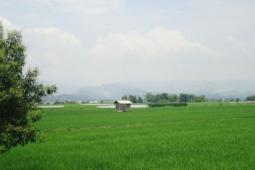 增加发展中的国家农作物保险采用率