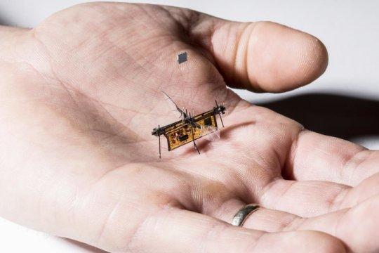 第一个无线飞行机器人昆虫起飞