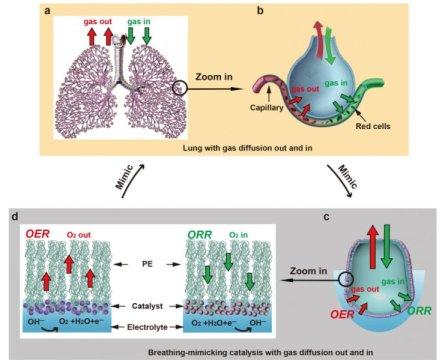肺部设计将水变成燃料