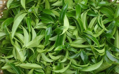 茶叶委员会发布了关于质量的新指南