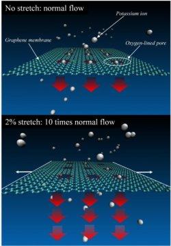 模拟表明石墨烯可以拉伸成可调谐离子过滤器