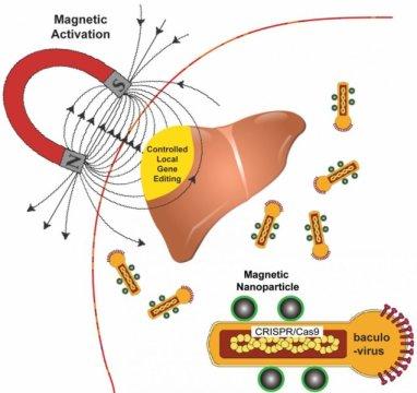 飞蛾和磁铁可以拯救生命