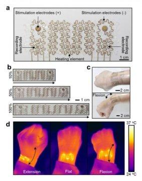 新型软质生物电子网在人体手腕和脉动猪心脏上进行了测试