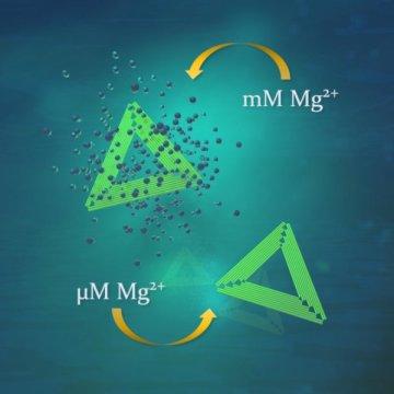来自生物医学的有希望的消息:DNA折纸比以前理解的更具弹性