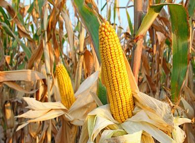 玉米大跌3.750阻力并突破近1年高位