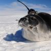 华盛顿大学的研究人员使用机器人来解开南极冰层巨大洞的奥秘