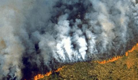 苹果在破纪录的大火中捐款恢复亚马逊雨林