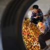 80岁奶奶直播带货一周卖杏40箱 网红奶奶表示自己是因为喜欢吃杏才嫁到这个村的