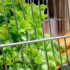 5月份零售业 餐饮业商务活动指数保持在55%以上