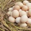 反映市场预期的鸡蛋期货价格也在不断走低